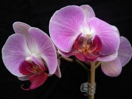 Orchideje - pro začátečníky