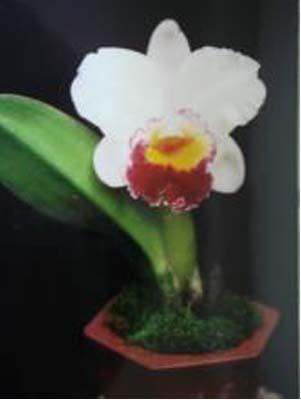 Blc.Chian-Tzy General 'CT-Tina' - 1