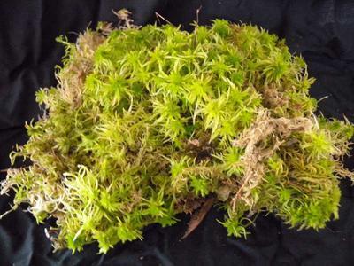 Sfagnum živé (živý rašeliník) - bal. 0,5 litr - 1