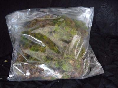 Sfagnum živé (živý rašeliník) - bal. 0,5 litr - 2