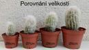 Espostoa melanostele - 3/3