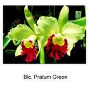 Blc.  Pratum Green